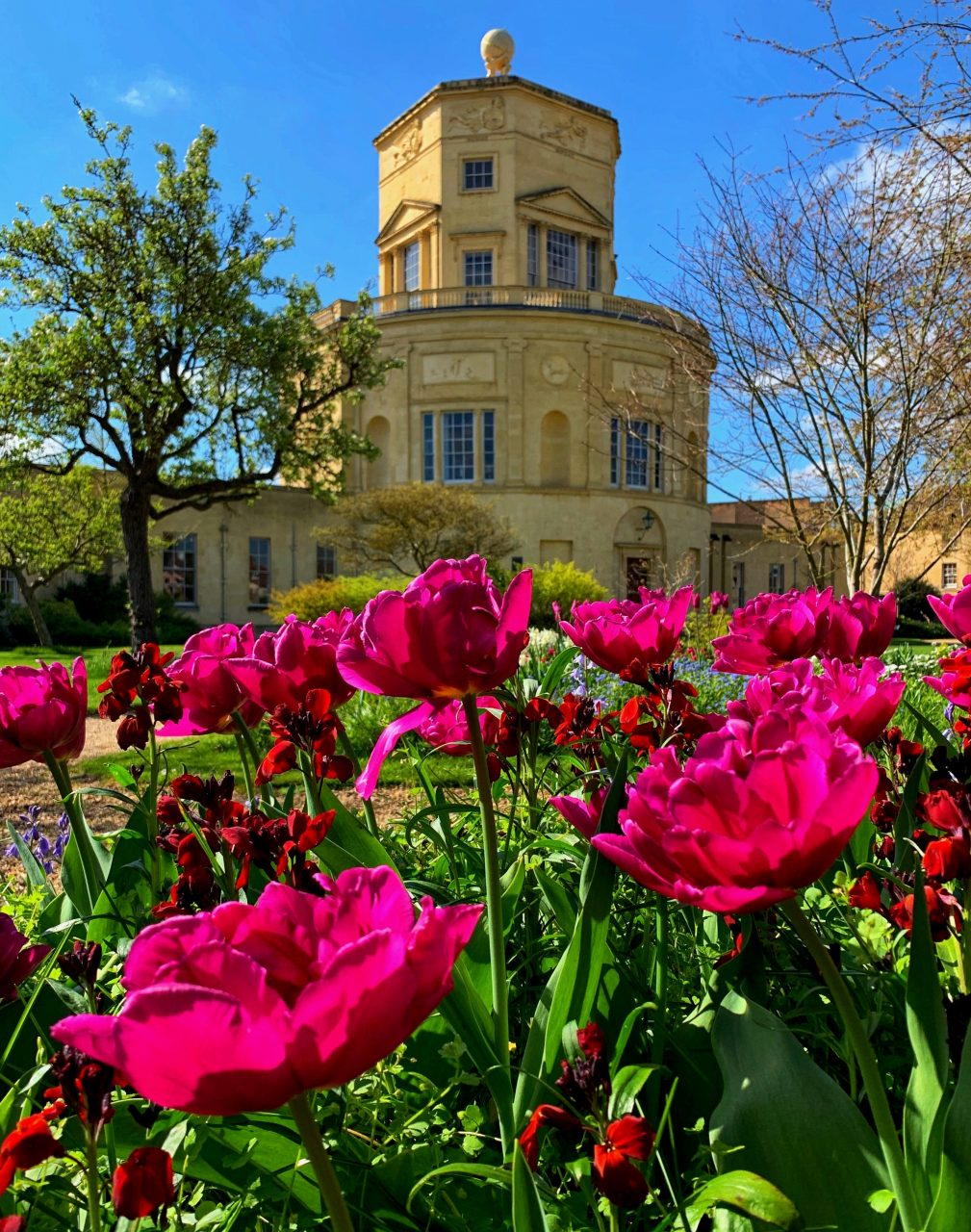 Radcliffe Observatory Flowers