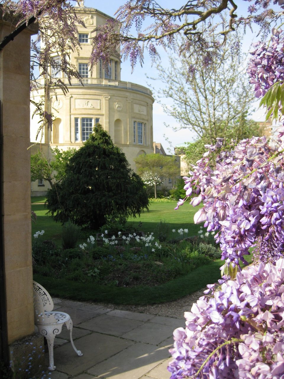 Wisteria and Radcliffe Observatory