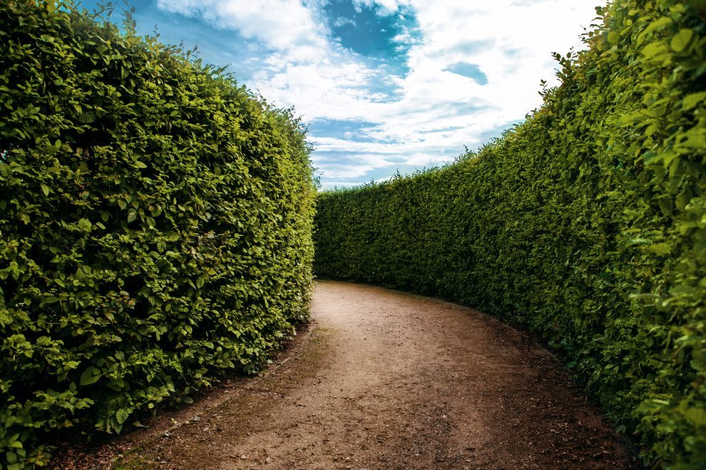 A winding and mysterious path curves around a lush green maze with tall hedge walls