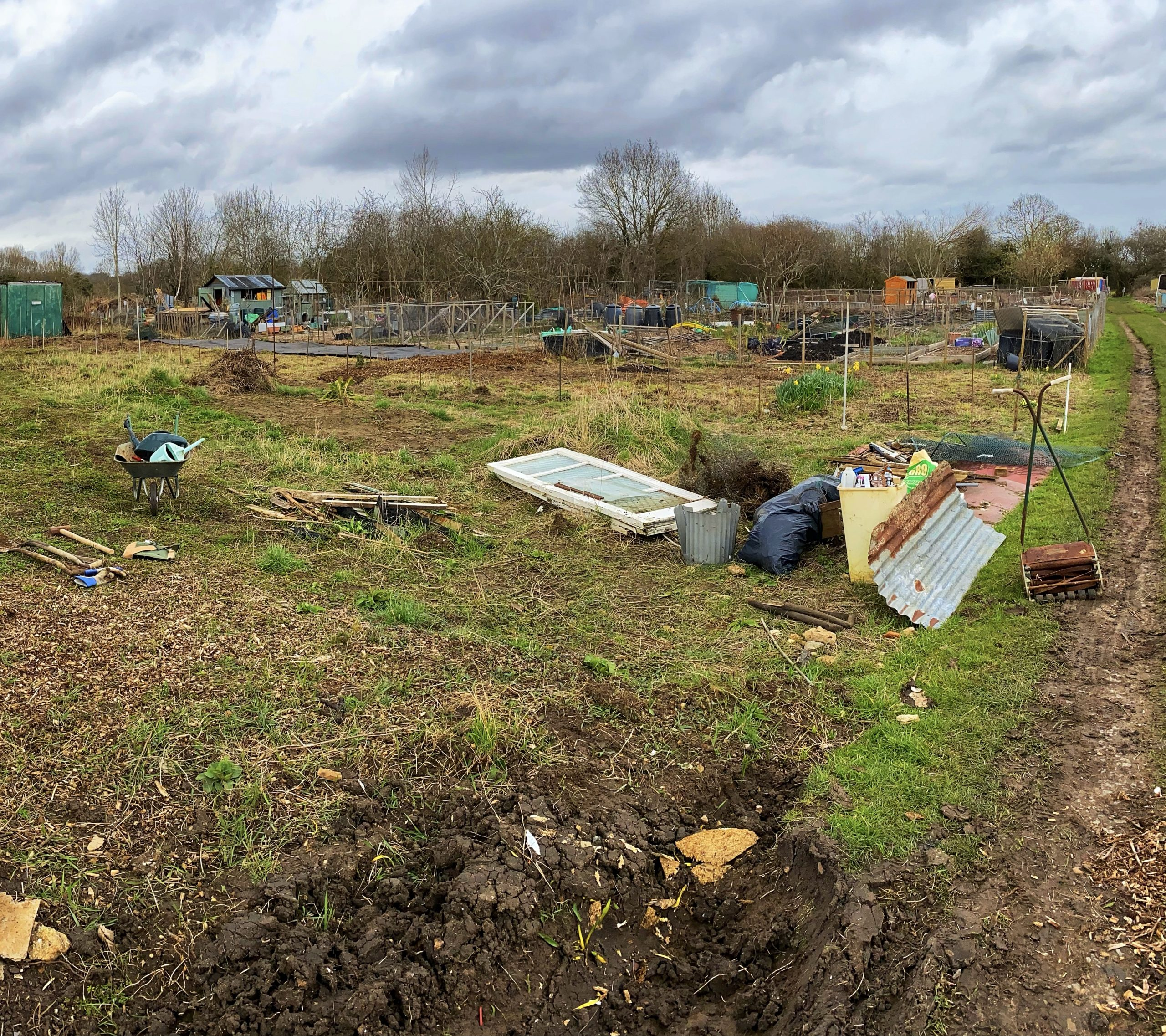 An overgrown allotment in Old Marston