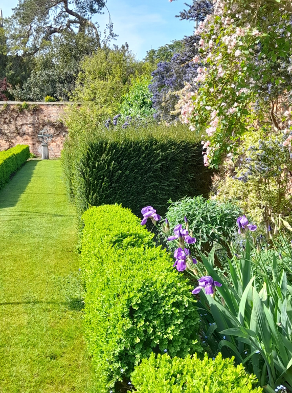 Purple flowers and low hedge along side of quiet and sunny Walled Garden